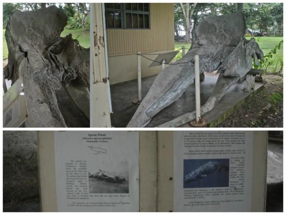 Whale log